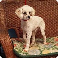 Adopt A Pet :: Elvis - Tulsa, OK