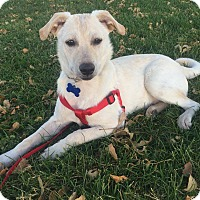 Adopt A Pet :: Willy - Denver, CO