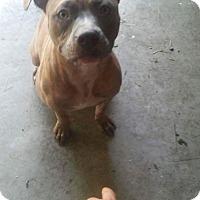 Adopt A Pet :: Fetty Wap - Lima, OH