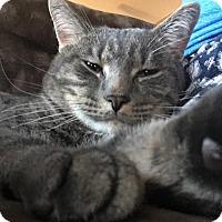 Adopt A Pet :: Jack - Rochester, MN