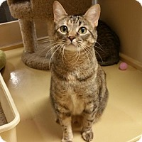 Adopt A Pet :: Louise aka Delta - McKinney, TX