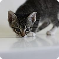 Adopt A Pet :: Clover - Marina del Rey, CA