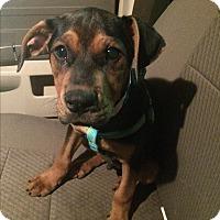 Adopt A Pet :: Jasper - Sagaponack, NY