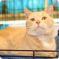 Adopt A Pet :: Morris - Rochester, MN