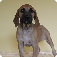 Adopt A Pet :: Bitzi - Waldorf, MD