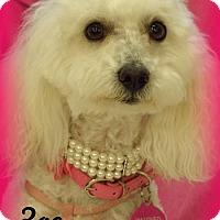 Adopt A Pet :: Zoe - Anaheim Hills, CA