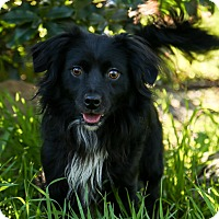 Adopt A Pet :: Levi - Auburn, CA