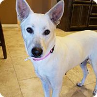 Adopt A Pet :: Stella - Allison Park, PA