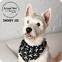 Adopt A Pet :: Smokey Joe - Omaha, NE