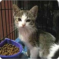 Adopt A Pet :: Chyna - The Colony, TX