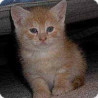 Adopt A Pet :: Mandarin - Reston, VA