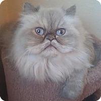 Adopt A Pet :: Sweetie - Davis, CA