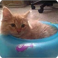 Adopt A Pet :: Crimson - Little Falls, NJ