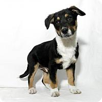 Adopt A Pet :: Boomer - Lufkin, TX