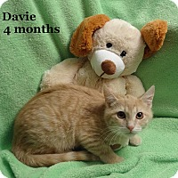 Adopt A Pet :: Davie - Bentonville, AR