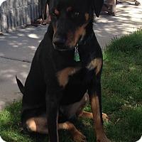 Adopt A Pet :: Rascal - Meridian, ID