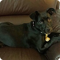 Adopt A Pet :: Molly - Miami, FL