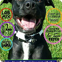Adopt A Pet :: Chance - Wichita, KS