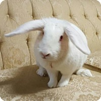 Adopt A Pet :: Eliza (pending) - Baton Rouge, LA
