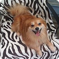 Adopt A Pet :: MIKA - conroe, TX