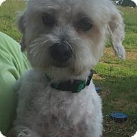 Adopt A Pet :: Bruiser - LEXINGTON, KY