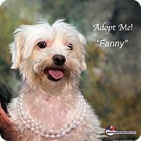Adopt A Pet :: Fanny - Acton, CA