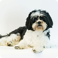Adopt A Pet :: Chip - Jacksonville, FL