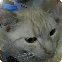 Adopt A Pet :: McCayla - Trevose, PA