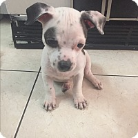 Adopt A Pet :: Arista - Miami, FL