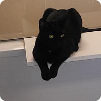 Adopt A Pet :: Jack H. - El Cajon, CA