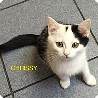 Adopt A Pet :: Chrissy - Merrifield, VA