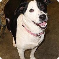 Adopt A Pet :: Bella - Little Compton, RI