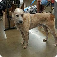 Adopt A Pet :: Flame - Fresno, CA