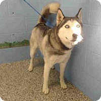 Adopt A Pet :: ELLIE - San Bernardino, CA