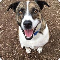 Adopt A Pet :: Boomer - Boise, ID