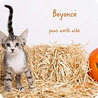 Adopt A Pet :: BEYONCE - Yucca Valley, CA