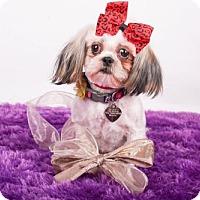 Adopt A Pet :: Ziva - Colorado Springs, CO