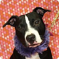 Adopt A Pet :: Gracie - Jackson, MI
