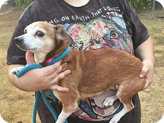 Miniature Pinscher Dog for adoption in Washington, D.C. - Ethel