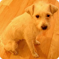 Adopt A Pet :: Kelsie-Adoption Pending - Boulder, CO