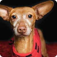Adopt A Pet :: Ralph Bacio - Los Angeles, CA