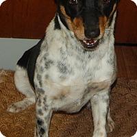 Adopt A Pet :: Emma - Manning, SC