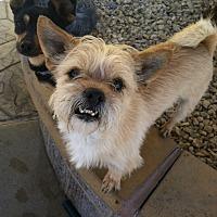 Adopt A Pet :: Trevor - Las Vegas, NV