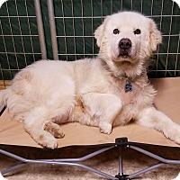 Adopt A Pet :: Oakley - Newnan, GA