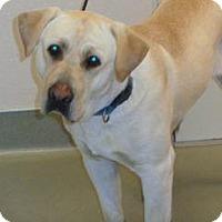 Adopt A Pet :: 328819 LF - Wildomar, CA