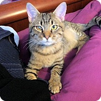 Adopt A Pet :: Rogue - Norristown, PA