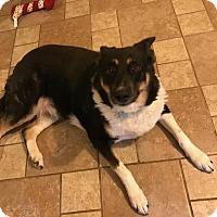 Adopt A Pet :: Emmy - CHESTERFIELD, MI