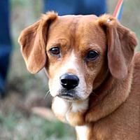 Adopt A Pet :: Lucy - McKenzie, TN