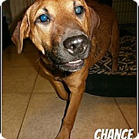 Adopt A Pet :: Chance - Silsbee, TX