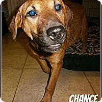 Adopt A Pet :: Chance - Silsbee, TX